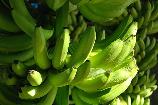 banana-rescue-center-01 Shore Excursions Caribbean
