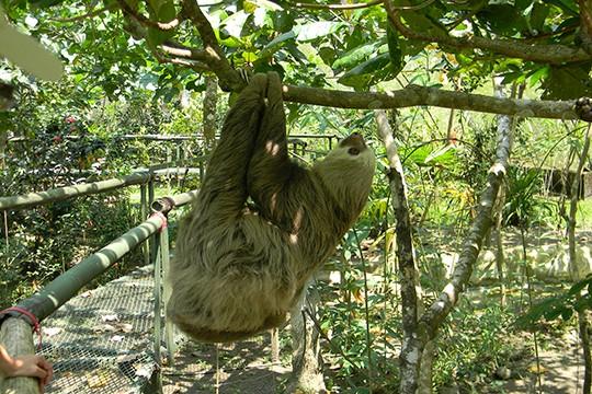 banana-rescue-center-03 Shore Excursions Caribbean
