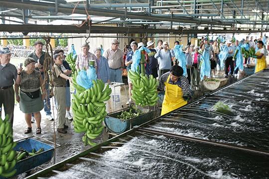 banana-rescue-center-04 Shore Excursions Caribbean