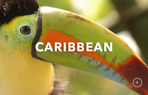 caribbean Shore Excursions