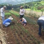img-guanacaste-agricultores-organicos-150x150 Costa Rica is close to becoming the first 100% renewable energy-powered country in Latin America