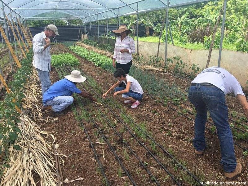 img-guanacaste-agricultores-organicos TAM NEWS