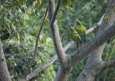 161114LimonBirds-400x284 2017, International Year of Sustainable Tourism for Development