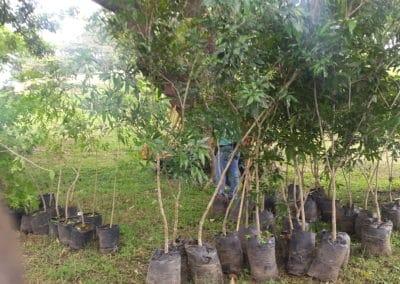 20170615_084104-400x284 Celebration of World Tree Day